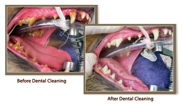 Before & After Pet Dental Care
