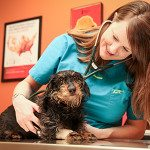 Pet Urgent Care - Springfield, MO